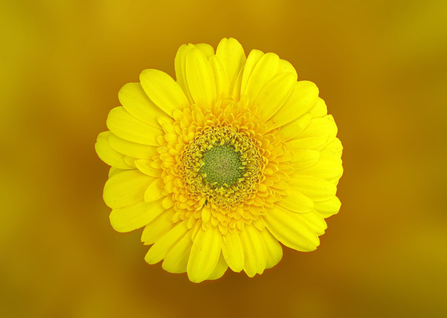 yellow flower bloom blossom